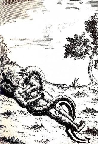 hydra - Hydra a układ limfatyczny.. 04-h
